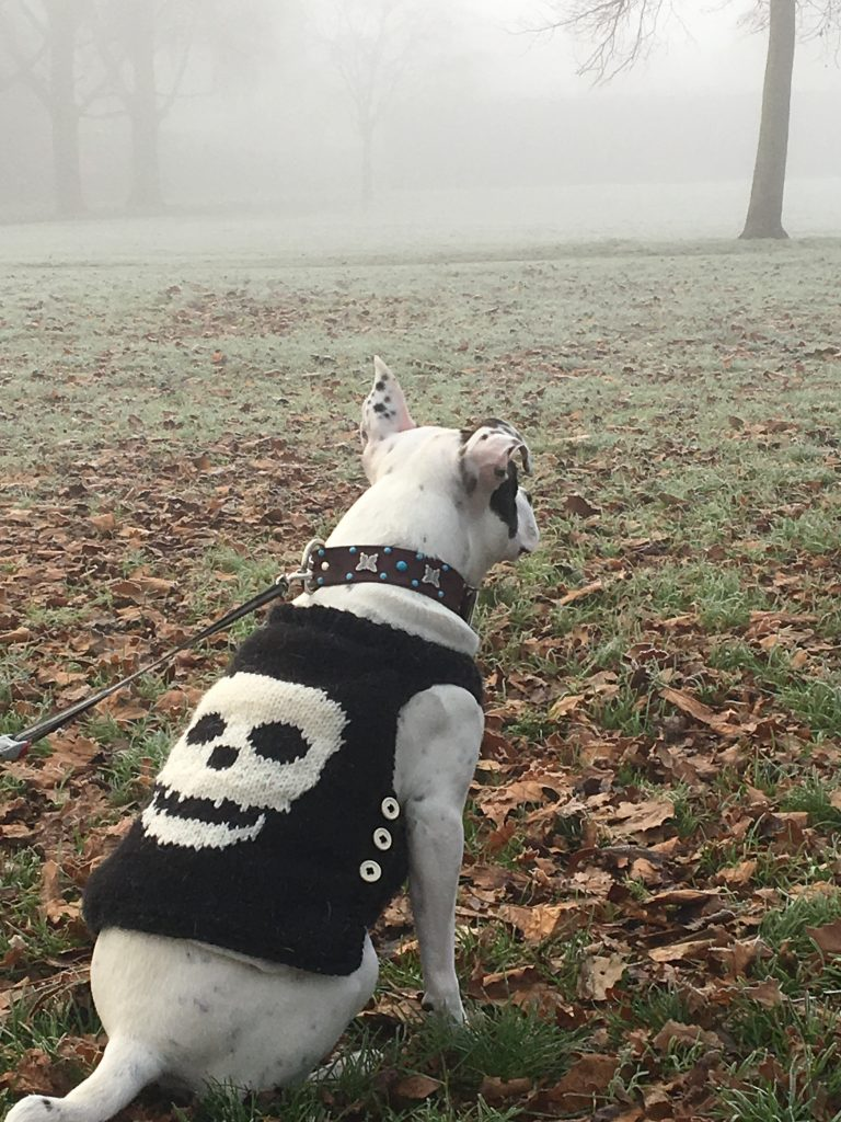 White spotty dog with knitted coat with skull on back
