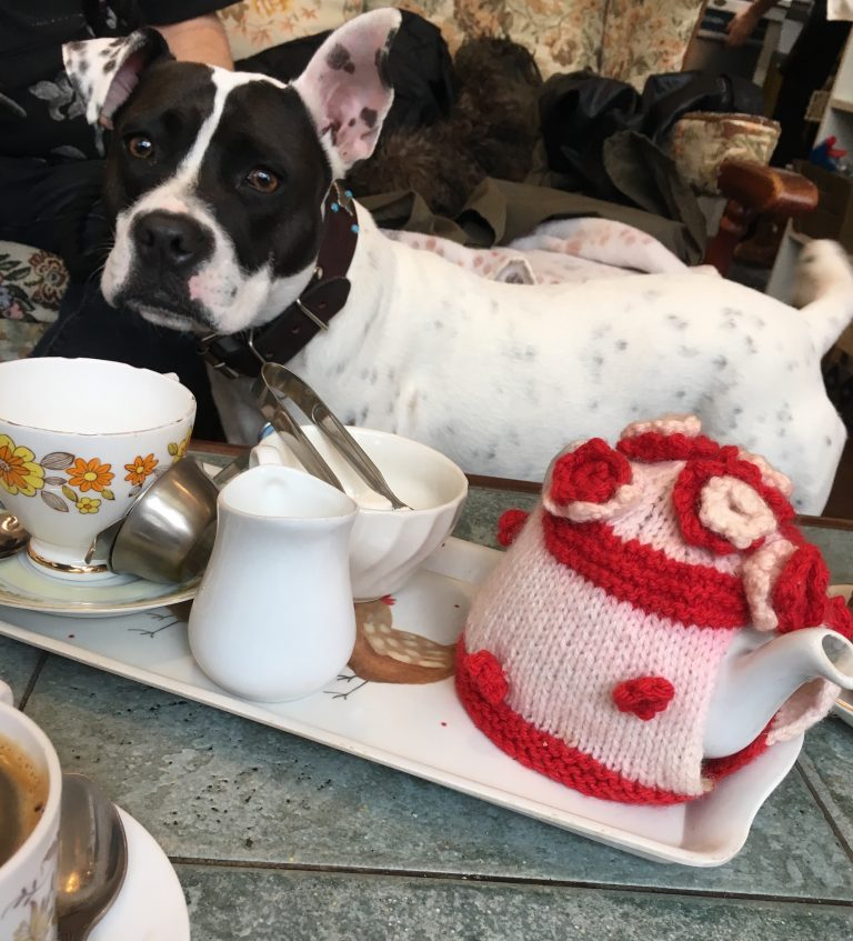 Lily the dog standing by a tea tray