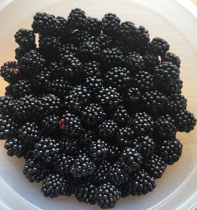 Blackberries in a tupperware container