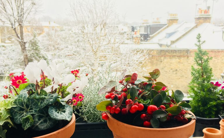 Snow in the garden from the windowsill