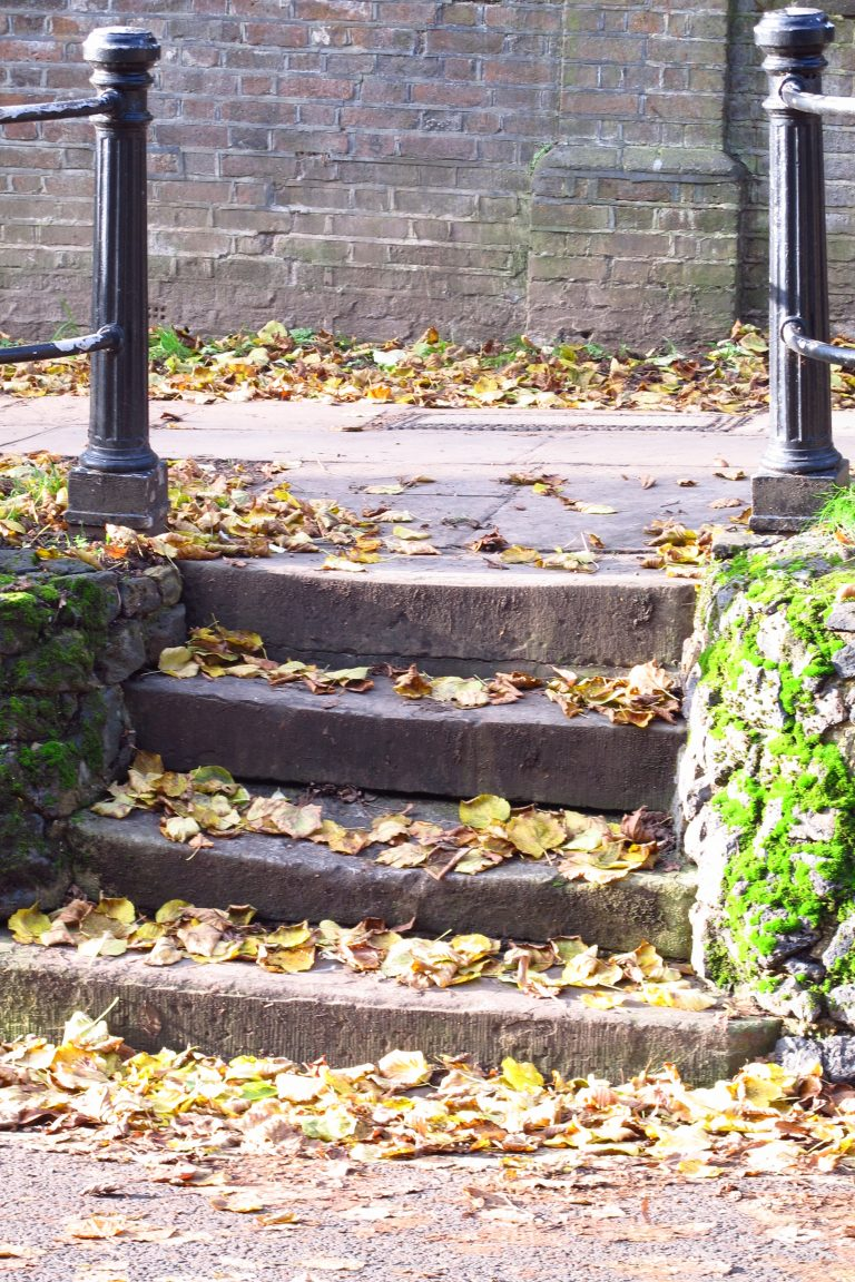 Fallen leaves on photogenic steps
