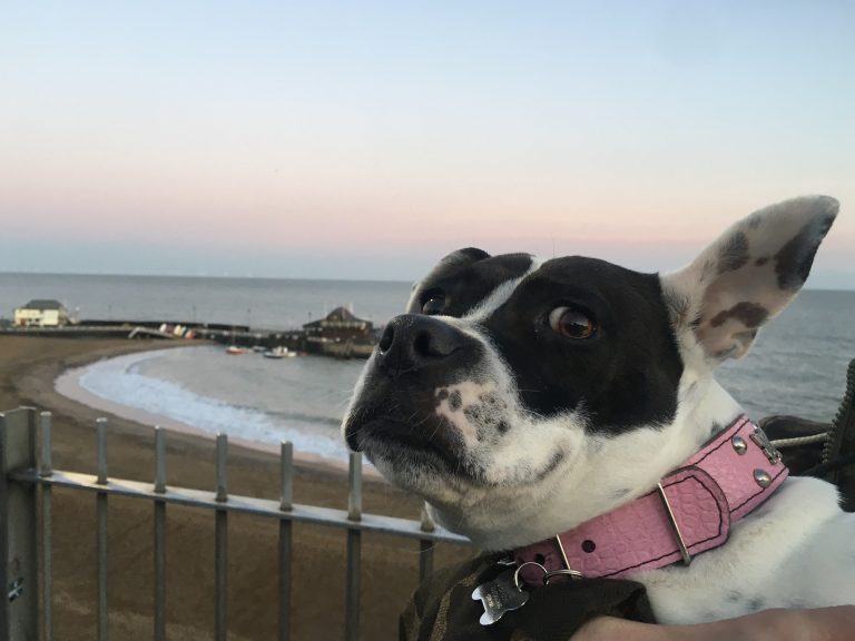 Lily on the prom